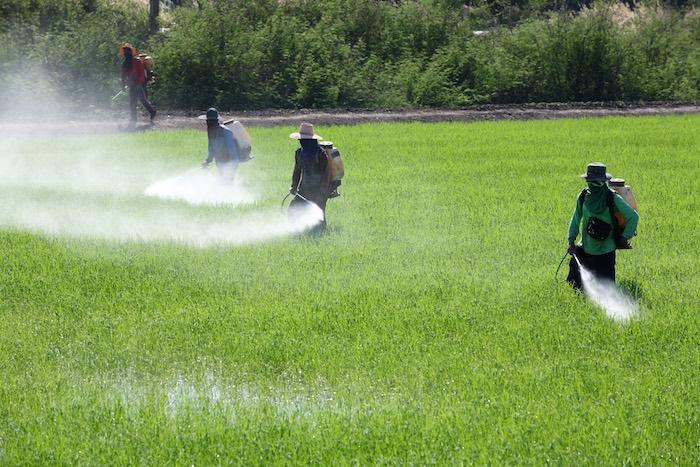 Costa Rica: La agroecología en el país más fumigado del mundo