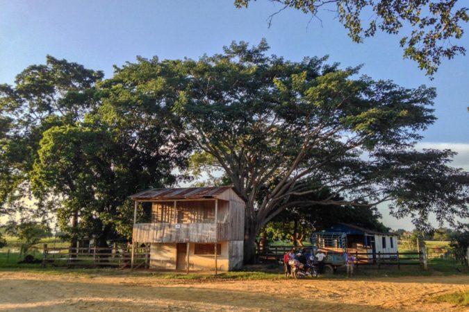Conservación perpetúa el saqueo de los bosques en Guatemala