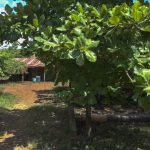 Guatemala: comunidades desplazadas del Petén llegan a México