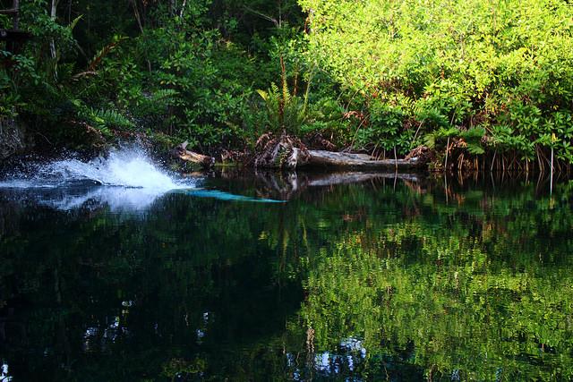 México: Nueva ley de biodiversidad legaliza despojo y destrucción
