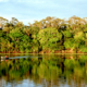 Los dueños del carbono en Brasil