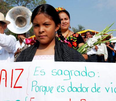 En México 3 cuartas partes del país aun siembra maíz nativo