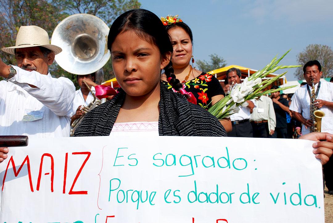 En México tres cuartas partes del país aun siembra maíz nativo