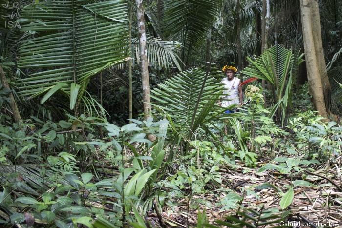 Brasil: Cientos de invasores entran en la Tierra Indígena Uru-Yo-Wau-Wau y preparan deforestación