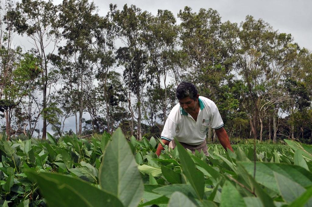 "Agricultura ""verde"" europea, vinculada con la deforestación en Latinoamérica"